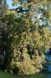 Een eenzame boom dompelde gedeeltelijk in het water onder Stock Foto's