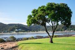 Een eenzame boom en een mening van Paihia van Waitangi-strand Stock Foto's