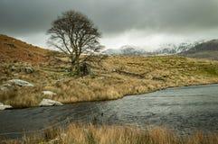 Een eenzame boom en een ondergedompelde omheining door Llyn Dywarchen in het Nationale Park van Snowdonia royalty-vrije stock fotografie