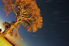 Een eenzame boom en sterslepen in Cirali Stock Foto's