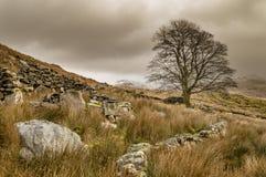 Een eenzame boom in Llyn Dywarchen in het Nationale Park van Snowdonia stock foto