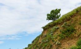 Een eenzame boom op een hellend groen gebied in het gebied van het heuvelsterrein Stock Afbeeldingen