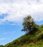 Een eenzame boom op een hellend groen gebied in het gebied van het heuvelsterrein Royalty-vrije Stock Foto's