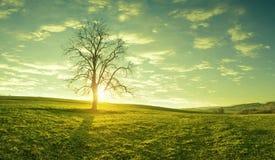Een eenzame boom op een weide bij zonsopgang, idyllische, fabelachtige landschappen Stock Fotografie