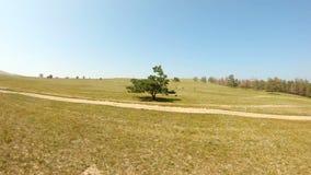Een eenzame boom op het gebied stock footage