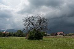 Een eenzame boom vóór het onweer Stock Fotografie