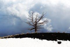 Een eenzame dode boom tegen bewolkte hemel Stock Fotografie