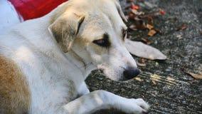 Een eenzame hond Stock Foto