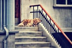 Een eenzame hond Royalty-vrije Stock Afbeeldingen