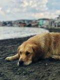 Een eenzame hond in het strand stock afbeelding