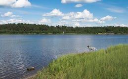 Een eenzame hond op een bosmeer royalty-vrije stock foto's