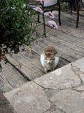 Een eenzame kat in de tuin stock foto's