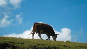 Een eenzame koe Stock Afbeelding