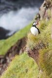 Een eenzame papegaaiduiker zit op de rand van een klip naast de oceaan stock afbeeldingen