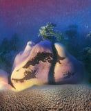 Een eenzame pijnboomboom op rotsen Stock Afbeelding