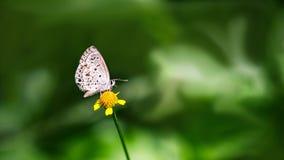 Een Eenzame Vlinder royalty-vrije stock afbeelding