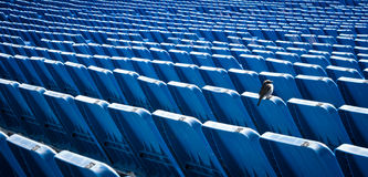 Een eenzame vogel op de tribunes van het Stadion Stock Afbeeldingen