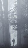 Wandelaar in Mistige Redwods Stock Afbeelding