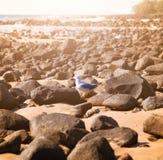 Een eenzame Zeemeeuw Stock Foto's
