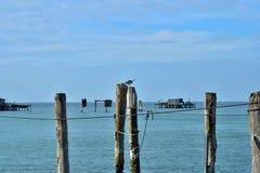 Een eenzame zeemeeuw bij de peer Stock Foto