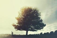 Een elegante mens die verbaasd een reusachtige boom bekijken stock afbeelding