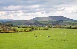 Een Engels Landelijk Landschap Stock Afbeelding