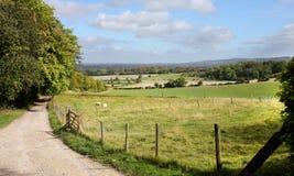 Een Engels Landelijk Landschap met rijpend Graan Stock Foto's