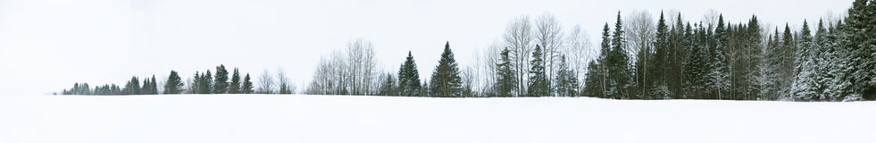Rechte boomlijn Royalty-vrije Stock Afbeeldingen