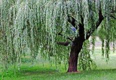 Een enkel boom Stock Foto's