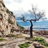 Een enkel boom Royalty-vrije Stock Fotografie