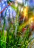 Een enkel heldere en kleurrijke de herfstdag Stock Foto's