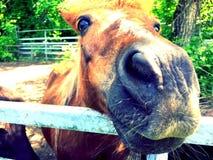 een enkel kleine poney Stock Fotografie