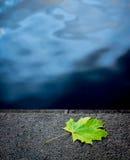 Een esdoornblad ligt op de oppervlakte, groen blad op blauwe achtergrond, één enkel blad dichtbij het water stock afbeelding