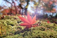 Een esdoornblad op morse-werf Stock Afbeeldingen