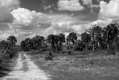 Een Everglades-Aandrijving door de Zwart-witte Hangmat Stock Foto's