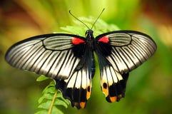 Een exotische vlinder. stock foto's