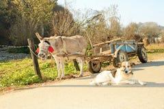 Een ezel stock foto's