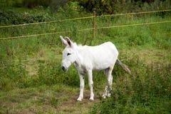 Een ezel royalty-vrije stock afbeelding