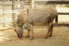 Een ezel in de dierentuin Royalty-vrije Stock Foto