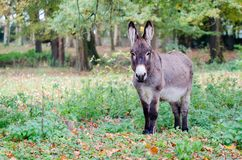 Een ezel in een opheldering royalty-vrije stock afbeeldingen