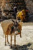 Een ezels dragend grint, Islamabad Pakistan Stock Fotografie