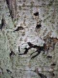 Een fabelachtig vreselijk monster leeft in de schors van deze boom Er zijn littekens en rimpels op zijn gezichten Royalty-vrije Stock Afbeeldingen