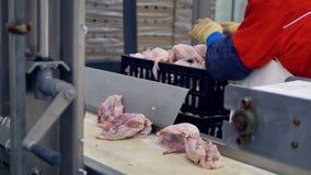 Een fabrieksarbeider verzamelt kippenkarkassen van een transportband bij ontmoet verwerkingsinstallatie 4K