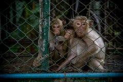 Een familie van apen stock afbeeldingen