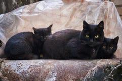 Een familie van drie straat zwarte katten wordt verwarmd op een pijp Royalty-vrije Stock Afbeelding