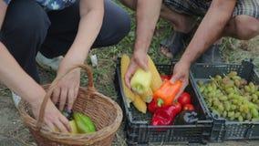 Een familie van het landbouwerswerk in hun tuin, kweekt organische en natuurlijke groenten, vruchten en de bessen, oogsten hun stock videobeelden
