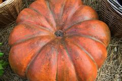Een feestelijke oranje pompoen voor Halloween van de inzameling van verse oogsten van de tuin ligt in het hooi onder geweven bask royalty-vrije stock afbeelding