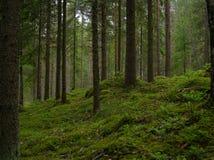 Een Fins bos stock foto