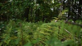 Een flard van trillende groene varens in een bos van Pennsylvania tijdens dag stock video