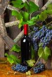 Een fles rode wijn op de achtergrond van druiven Stock Afbeelding